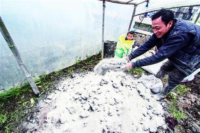 庞丽静   进入6月中旬,黑龙江农垦总局下属农场的农作物绿油油一片。那些在两个月前裹着粉红色种衣剂的种子和施用过的化肥、农药,已看不到踪迹,它们渗透到了土壤中。   一位农场承包户对经济观察报记者说,这些裹在种子外面的种衣剂,是一种农药制品,播撒到土壤里,可防虫鸟啃食,也能防止种子在土壤中粉化。其毒性不小,对人身体有害,但是能提高产量。   每到春耕之后喷洒农药的季节,周围河水中的鱼儿就不再欢蹦乱跳。一些鱼被农田排出的农药污水毒死,漂浮到水面上。无法降解的农药和化肥残留物年复一年地累积在土壤当中。